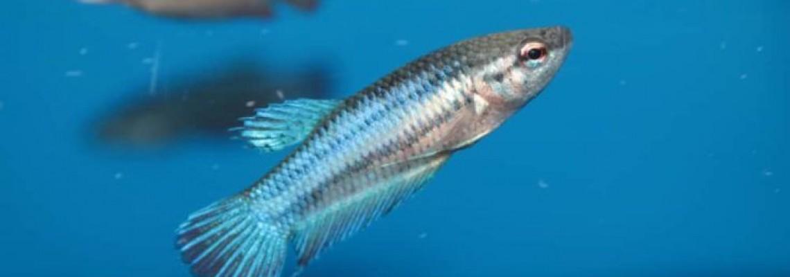 تبدیل روغن ماهی به یک غذای فراسودمند با فناوری نانو